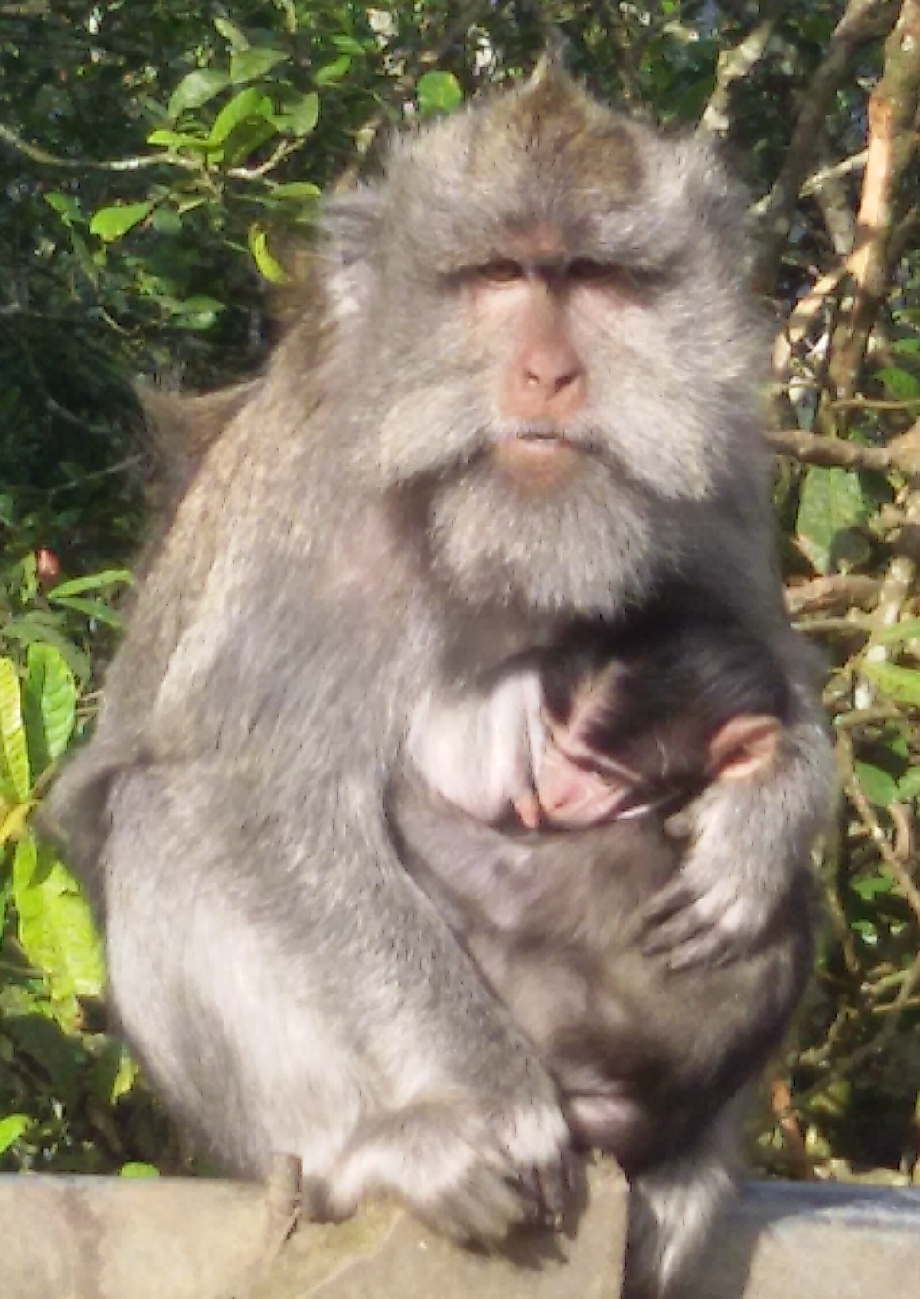 MONKEY FOREST BALI TOURISM DIRECTORY